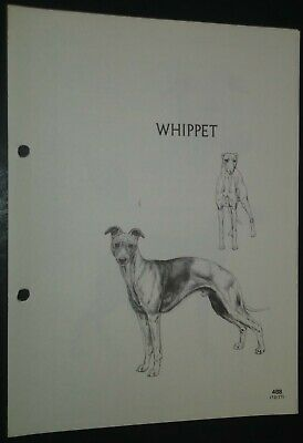 Whippet RAS Kennel Control Breed Standards M Davidson Ill