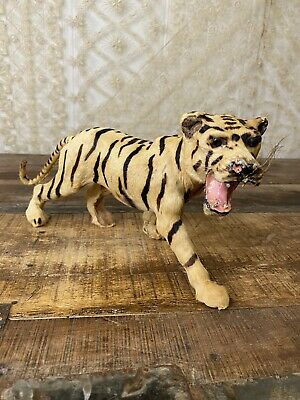 Antique Vintage Real Skin Tiger Mini Taxidermy Figure Model Fair Prize Oddities