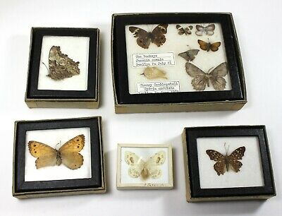Mixed Real Vintage Butterfly/Moth Lot #3