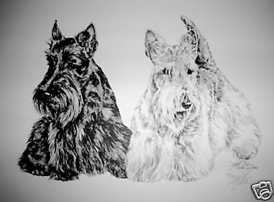 Scottish Terrier Girl Watching  By Lyn St.Clair