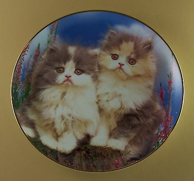 WHAT CAN THE MATTER BE? Kitten Plate Purrfect Portraits