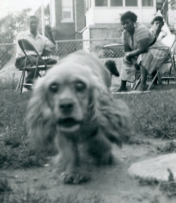 AFRICAN AMERICAN FAMILY COCKER SPANIEL DOG FUNNY PHOTO