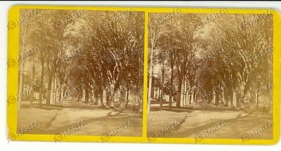 1890 NEW HAVEN (Connecticut, USA) The Temple Street - Stereoscopy