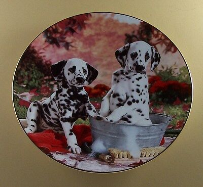 YOU MISSED A SPOT Those Delightful Dalmatians Plate Dog Puppy Floral