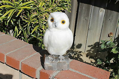 White Realistic Large Feather Owl Bird Taxidermy Owls Furry Animal Bird