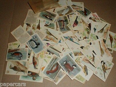 Arm & Hammer Vintage 1920s Birds Trading Card 108 Lot Third Eighth Series No. 4