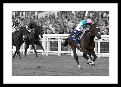 Frankel  - Horse Racing Legends Spot Colour Photo Memorabilia (SPOT1102)