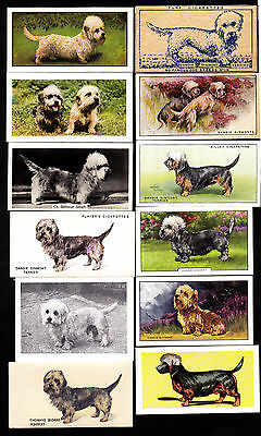 Lot Of 18 Different Vintage Dandie Dinmont Terrier Dog Cigarette Cards
