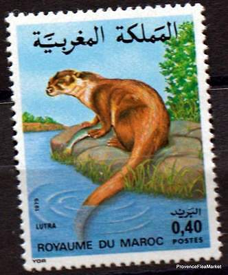 Yt 842  MAROC  MOROCCO Timbre Neuf ** TTB  Faune marocaine - Loutre