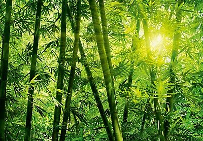 Wall mural photo wallpaper BAMBOO FOREST Green large size wall art for home wall