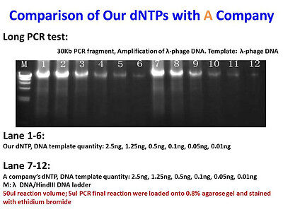 100mM dNTP for PCR Master Mix, PCR application, Taq DNA Polymerase agarose
