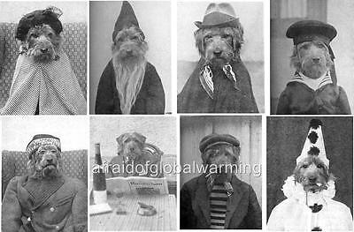 Photo. ca 1924.  Funny Dog - Airedale Terrier