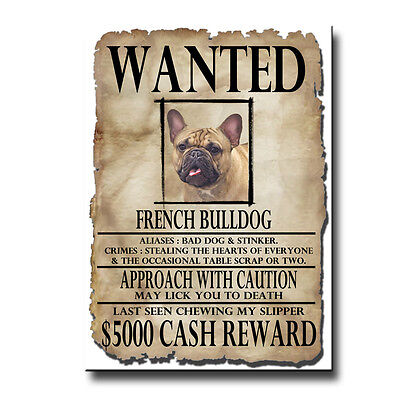 FRENCH BULLDOG Wanted Poster FRIDGE MAGNET No 3 DOG Frenchy