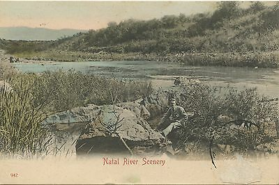 Postcard / British Colonies / South Africa / Natal River Scenery