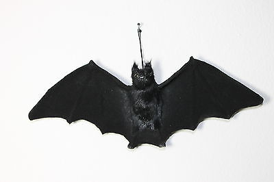 Black Vampire Bat Realistic Spooky Halloween Horror Haunted Bats Furry Animal Sm