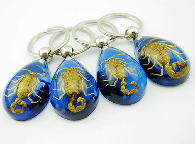 17 pcs SCORPION Ring Genuine INSECT BLUE Key Chain Keyring Lucite