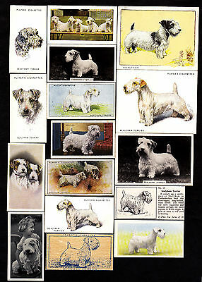 Lot Of 19 Different Vintage SEALYHAM TERRIER Dog Cigarette Cards