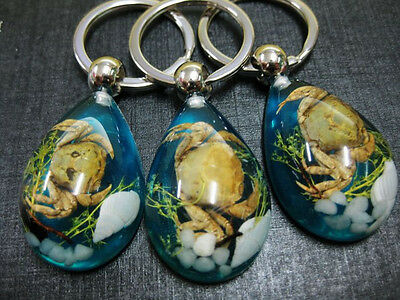 10pcs wholesale lots chinese insect bee real steamed crab stone blue key-chains