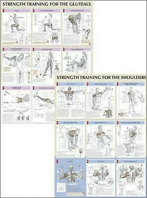 Strength Training Anatomy Poster Series by Frederic Delavier Paperback Book (Eng