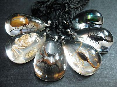 6 PCS Real insect In Acrylic Resin Cool Birthday Gift Pendant