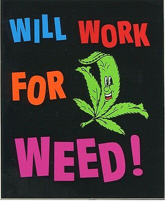 WILL WORK FOR WEED! hemp leaf STICKER -pot bud ganja **FREE SHIPPING** -d 23004