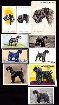 10 Different Vintage Kerry Blue Terrier Tobacco/Candy Dog Cards