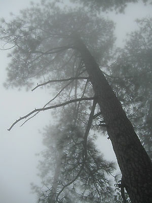 1/3 ACRE LOT IN CRESTLINE/CEDARPINES PARK ON FOREST DRIVE ~ TERMS
