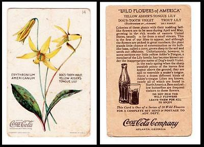 Antique 1920's Coca Cola Wild Flowers Of America Card Yellow Adders Tongue Lily