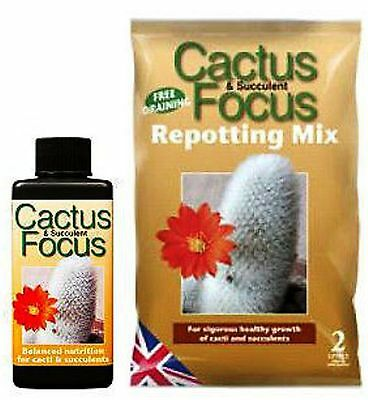 Cactus and Succulent Focus Repotting Mix + 100ml Cactus Focus Nutrients