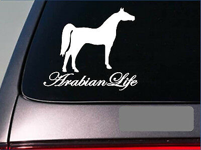 Arabian Life *E242* sticker decal horse saddle stirrup boots barn stock yard