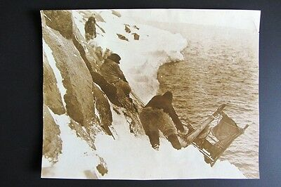 Foto originale MACMILLAN'S ARCTIC EXPEDITION vintage press photo 1924