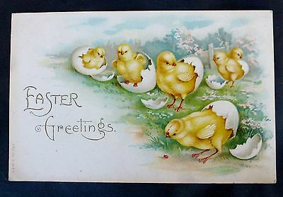 EARLY 1900'S EASTER GREETINGS. CHICK POSTCARD