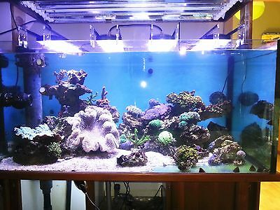 Accessory Of Aquarium Light LED 4 Channels Dimmable Marine/Freshwater Lighting