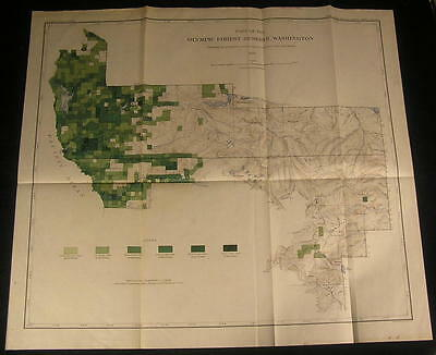Washington state Forest reserve Spruce trees ca. 1899 detailed color Timber map