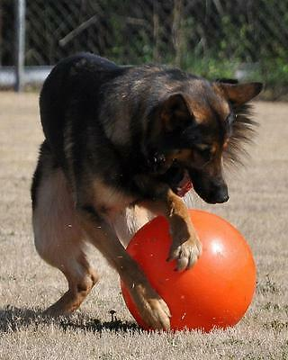 The Varsity Ball -- The World's First 110% Guaranteed Indestructible Dog Toy