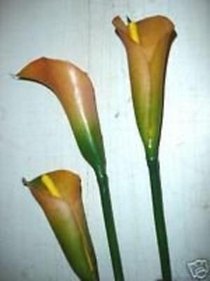 Pack x36 Stems Artificial Synthetic Flowers Peach Calla Lily OFFER!