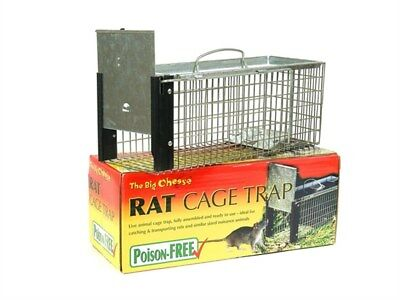 The Big Cheese Large Rodent Rat Cage Trap Ready to Use No Building No Poison
