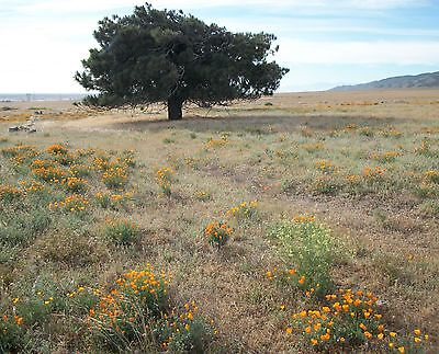 BEAUTIFUL RAW TWO ACRES IN WEST LANCASTER CALIFORNIA WITH BREATH TAKING VIEWS