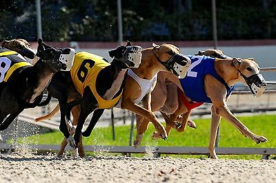 How To Win BIG MONEY At The Greyhound Races - Basic Course - NOW ON DVD!!!