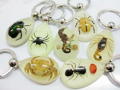 7 PCS New Novelty Gift Glow in the Dark Resin with Insect inside Keyring NG