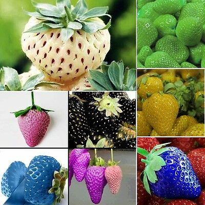 1 Pack 100pcs Rare Delicious Strawberry Seeds Vegetables Fruit Plant Seed