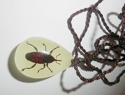 Insect Small Necklace - Tea Seed Weevil Snout Beetle (Oval Shape - Glow)