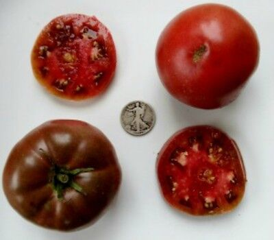 1884 Purple - Organic Heirloom Tomato Seeds - Awesome Beefsteak - 40 Seeds