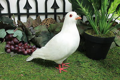 Feather White Standing Realistic Pigeon Bird Taxidermy Furry Animal Unique