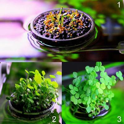 Aquarium Fish Tank Plant Growing Pot Bowl Holder with Round Leaf Plant Seeds