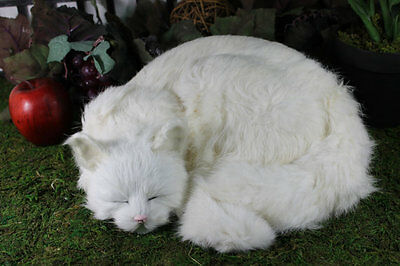 White Sleeping Cat Adorable Furry Animal Taxidermy Figurine Decor Kitty Snowy