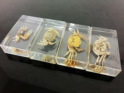4PCS Real Gold Mix Crab Insect Specimens In Lucite Paperweight/Collection