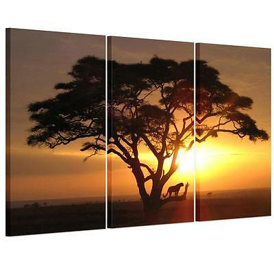 Large Sunset Tiger Tree Unframed HD Canvas Print Wall Art Picture Split Poster