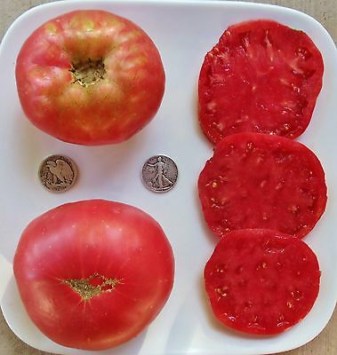 Rose - Organic Heirloom Tomato Seeds - Very Delicious Beefsteak - 40 Seeds