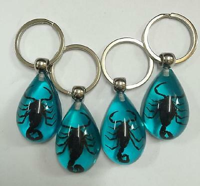 12 pcs real insect keychain specimen black scorpion blue drop key ring NG